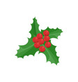 mistletoe decoration leaves with barries vector image vector image