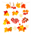 Autumn background with colorful leaves Design vector image vector image