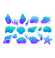 colorful sea shells algae and starfish vector image