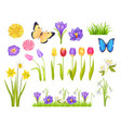 flowers and butterflies set vector image