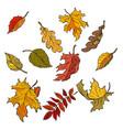 autumn leaves of trees seasonal fallen crown set vector image vector image
