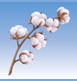 beautiful realistic cotton branch isolated on blue vector image vector image