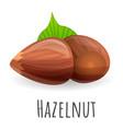 hazelnut icon cartoon style vector image
