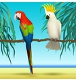 Parrots Cockatoo realistic birds sitting on vector image