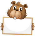blank sign template with cute beaver on white vector image vector image