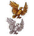 hawk or eagle heraldic golden bird vector image vector image