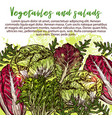 sketch poster of salads vegetables vector image vector image