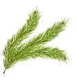 Fir Branch Isolated on White Background vector image