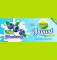 blueberry yogurt label for design vector image vector image