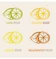 Citrus Ifruits cons vector image
