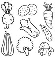 Hand draw vegetable of doodles
