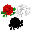red rose and leaves natural and outline vector image vector image