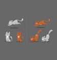 set of cat poses kitten plays jumps vector image