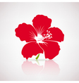 red hibiscus flower vector image vector image