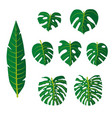 set of tropical leaves flowers vector image