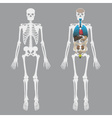 white human bones skeleton with human organs eps10 vector image vector image
