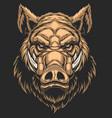 head ferocious boar vector image vector image