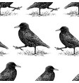 seamless background of striding starlings vector image vector image