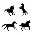 Black horses vector image vector image