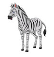 cute zebra cartoon isolated on white background vector image