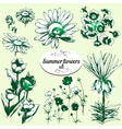 summer flowers set vector image