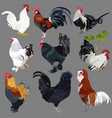 collection of realistic cocks of various breeds vector image vector image