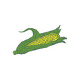 hand drawn corn isolated on white background vector image vector image