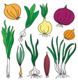 set of onions vector image vector image