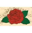 Rose tattoo on the old background with blots vector image