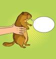 groundhog in hands pop art vector image vector image