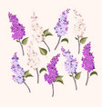 set of branches of purple and white lilac vector image
