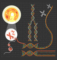 genetics dna structure vector image