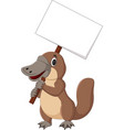 cartoon platypus holding blank sign vector image vector image