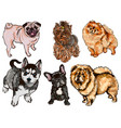 colorful set of of dogs of different vector image