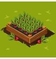 Vegetable Garden Box with Beet Set 3 vector image vector image
