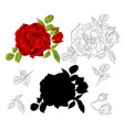 red rose with buds and leaves natural and outline vector image vector image