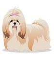 shih tzu dog vector image vector image