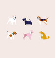 breed dogs vector image vector image