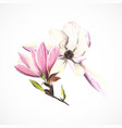 magnolia color pencils hand drawing image vector image vector image