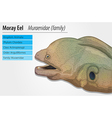 Moray eel vector image vector image