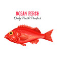 ocean perch vector image