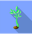 plant growth little green sprout seedling vector image