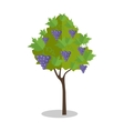 Purple Grapes Hanging on a Bush vector image vector image
