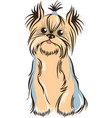 yorkshiere terrier sketch vector image