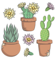 Set colored cactus with flowers in old pots