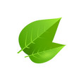 two green tree leaves vector image