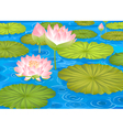 lotus flowers in pond vector image vector image