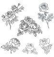 set rose sketch vector image vector image