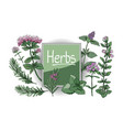 set with culinary spicy herbs vector image