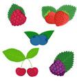 berries and stone fruits vector image vector image